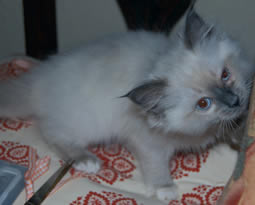 blue mitted girl